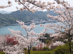 風景(桜と海)1