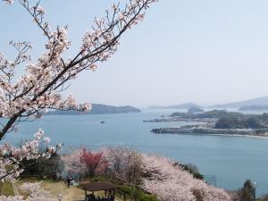 風景(桜と海)2